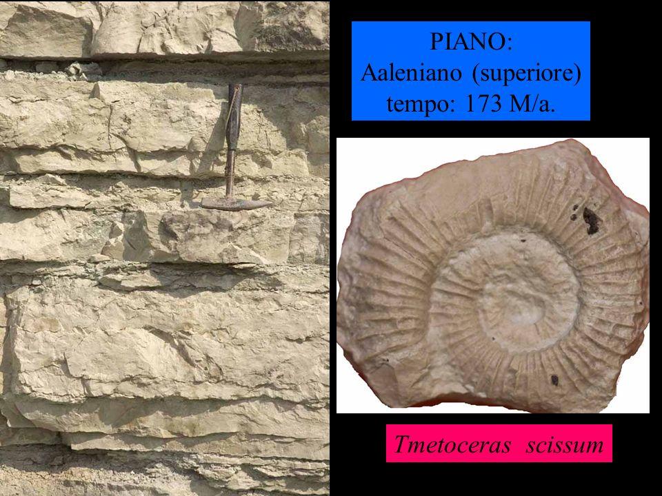 PIANO: Aaleniano (superiore) tempo: 173 M/a. Tmetoceras scissum