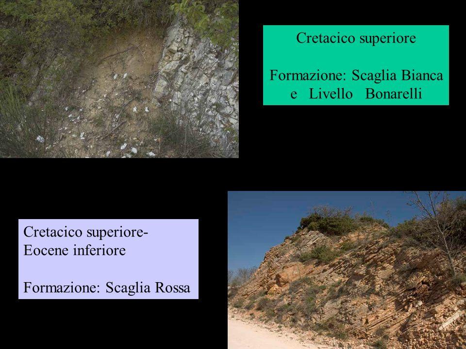 Cretacico superiore Formazione: Scaglia Bianca e Livello Bonarelli Cretacico superiore- Eocene inferiore Formazione: Scaglia Rossa