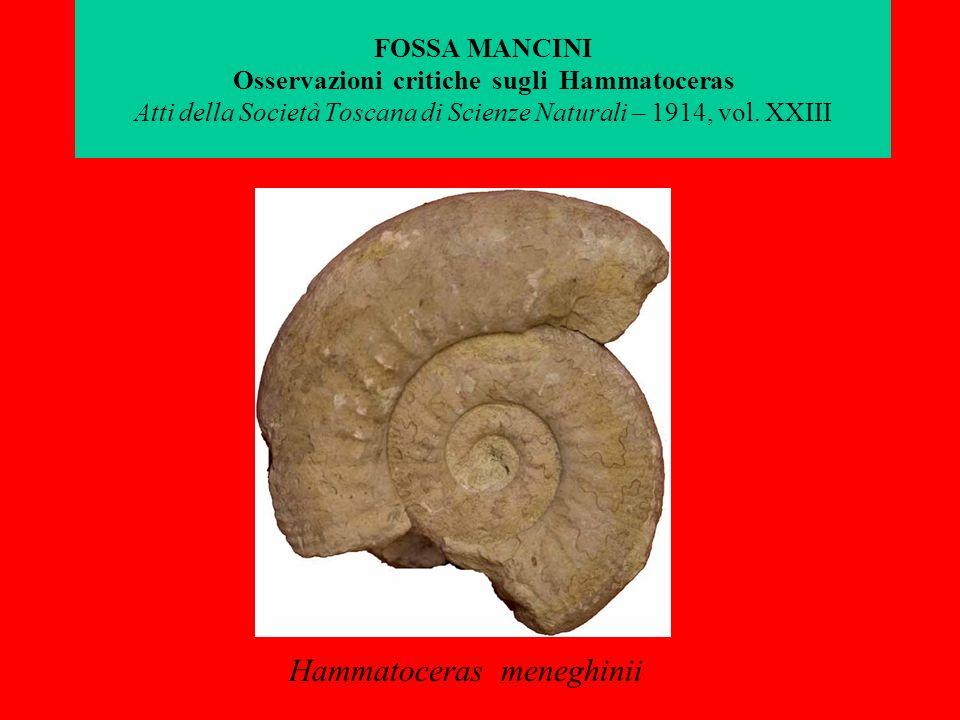 FOSSA MANCINI Osservazioni critiche sugli Hammatoceras Atti della Società Toscana di Scienze Naturali – 1914, vol. XXIII Hammatoceras meneghinii