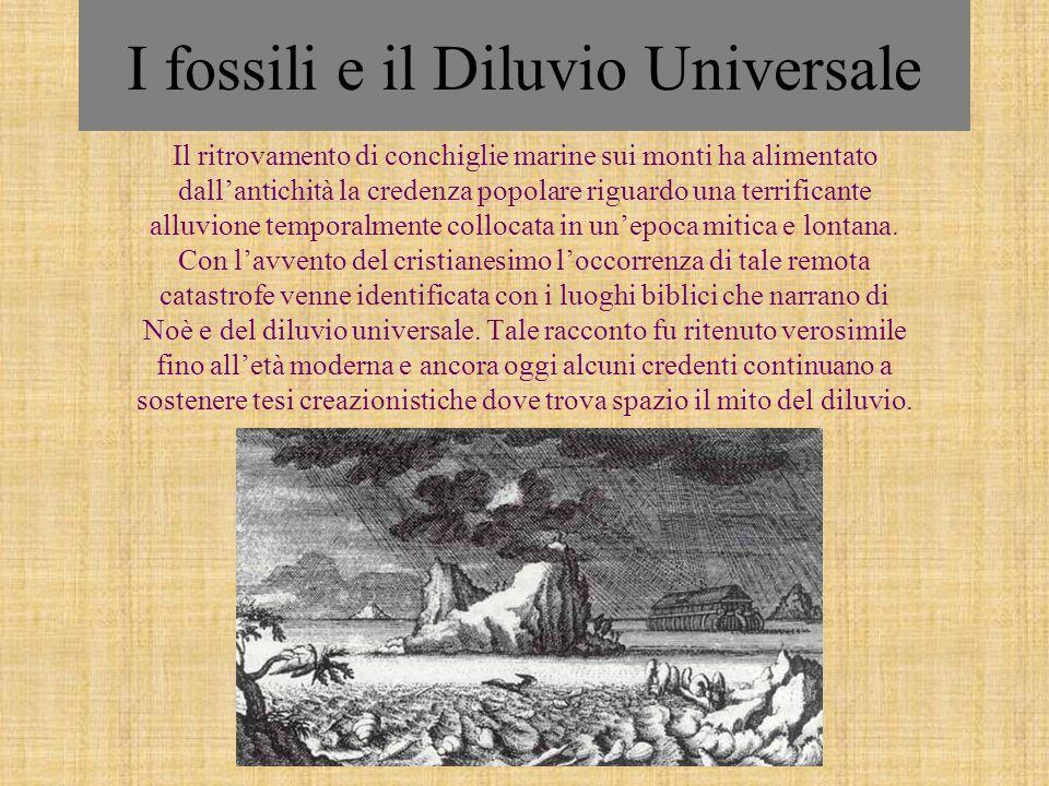 I fossili e il Diluvio Universale Il ritrovamento di conchiglie marine sui monti ha alimentato dallantichità la credenza popolare riguardo una terrifi