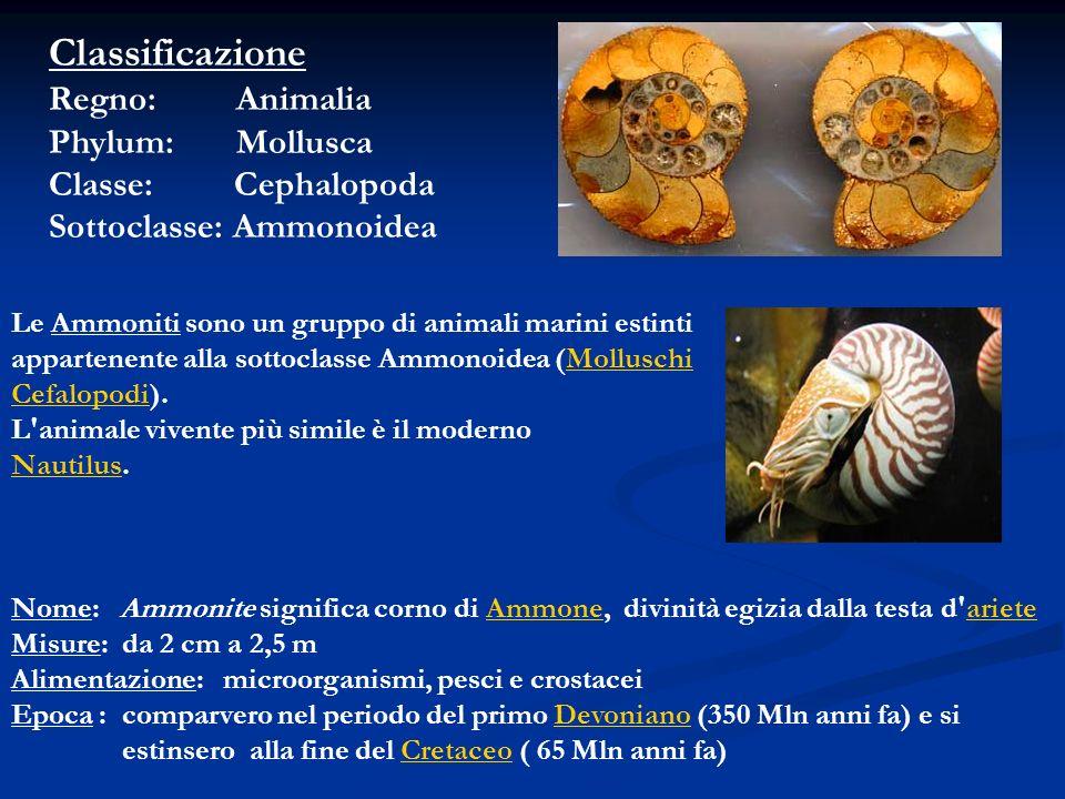 Classificazione Regno: Animalia Phylum: Mollusca Classe: Cephalopoda Sottoclasse: Ammonoidea Le Ammoniti sono un gruppo di animali marini estinti appa