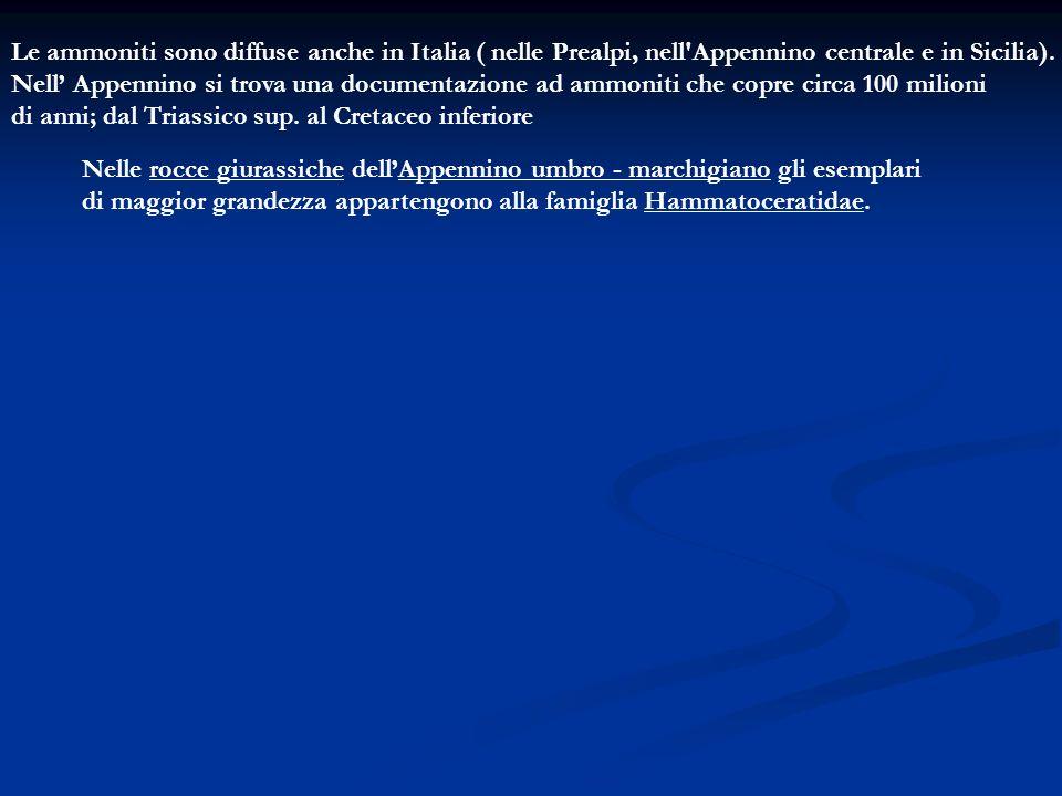 Le ammoniti sono diffuse anche in Italia ( nelle Prealpi, nell'Appennino centrale e in Sicilia). Nell Appennino si trova una documentazione ad ammonit