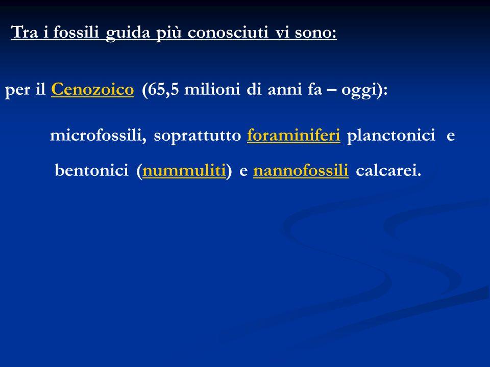 per il Cenozoico (65,5 milioni di anni fa – oggi): microfossili, soprattutto foraminiferi planctonici e bentonici (nummuliti) e nannofossili calcarei.