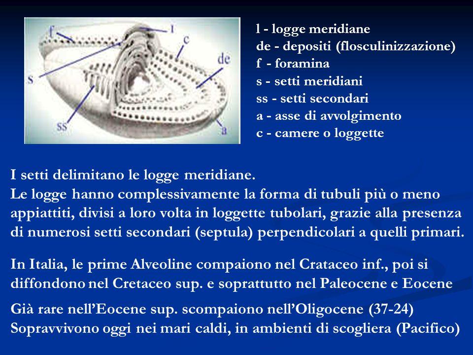 I setti delimitano le logge meridiane. Le logge hanno complessivamente la forma di tubuli più o meno appiattiti, divisi a loro volta in loggette tubol