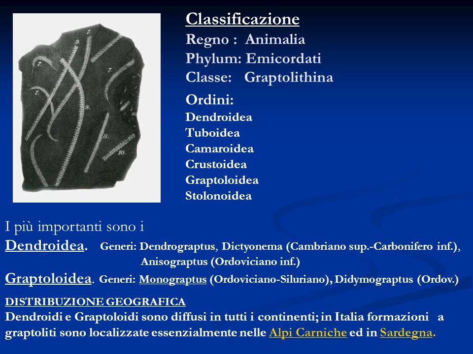 Classificazione Regno : Animalia Phylum: Emicordati Classe: Graptolithina Ordini: Dendroidea Tuboidea Camaroidea Crustoidea Graptoloidea Stolonoidea I