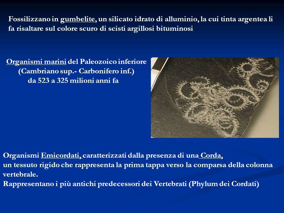 I Graptoliti secernono un scheletro esterno di natura organica (chitina) formato da un insieme di calici chitinosi a forma di coppa (teche) che nel vivente contenevano i singoli individui (zooidi).