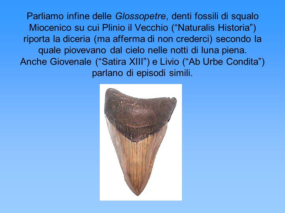 Parliamo infine delle Glossopetre, denti fossili di squalo Miocenico su cui Plinio il Vecchio (Naturalis Historia) riporta la diceria (ma afferma di n
