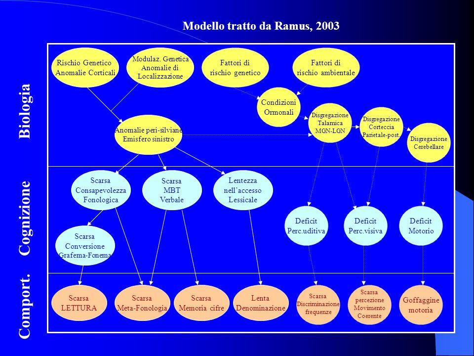 Modello tratto da Ramus, 2003 Biologia Cognizione Comport. Rischio Genetico Anomalie Corticali Modulaz. Genetica Anomalie di Localizzazione Anomalie p