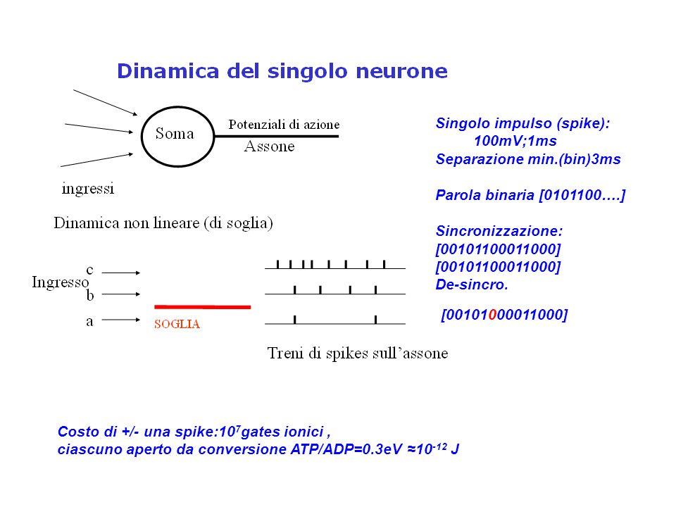 Singolo impulso (spike): 100mV;1ms Separazione min.(bin)3ms Parola binaria [0101100….] Sincronizzazione: [00101100011000] De-sincro.