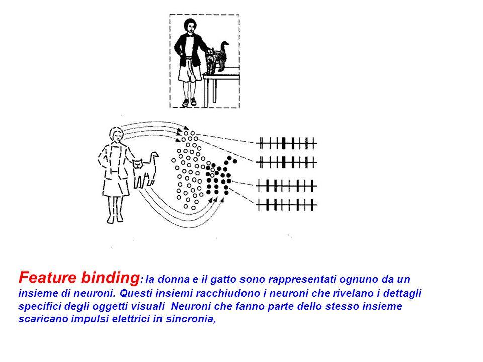 Feature binding : la donna e il gatto sono rappresentati ognuno da un insieme di neuroni.