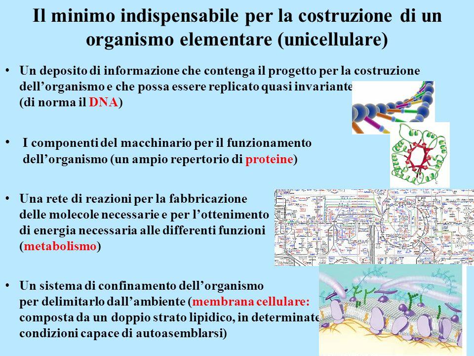 Il minimo indispensabile per la costruzione di un organismo elementare (unicellulare) Un deposito di informazione che contenga il progetto per la cost