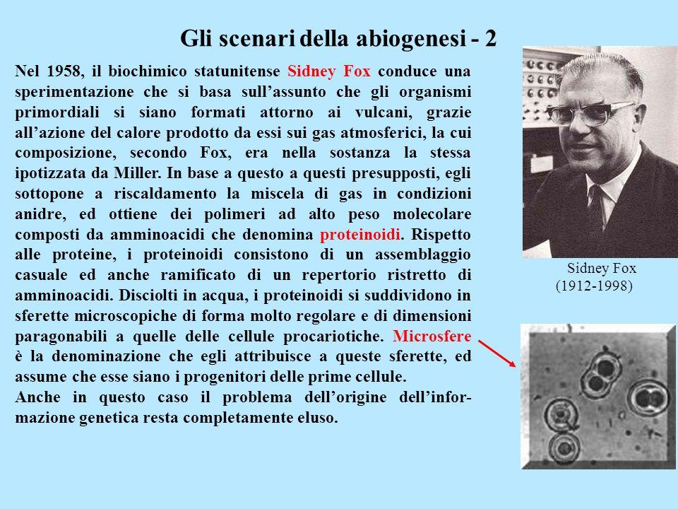 Sidney Fox (1912-1998) Gli scenari della abiogenesi - 2 Nel 1958, il biochimico statunitense Sidney Fox conduce una sperimentazione che si basa sullas