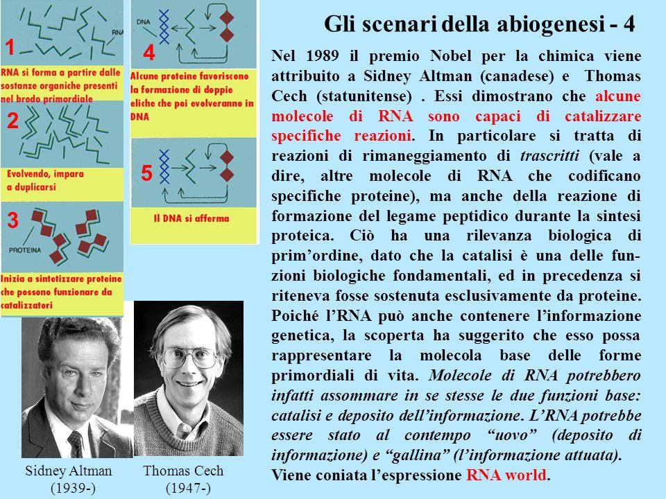 Gli scenari della abiogenesi - 4 Sidney Altman Thomas Cech (1939-) (1947-) Nel 1989 il premio Nobel per la chimica viene attribuito a Sidney Altman (c