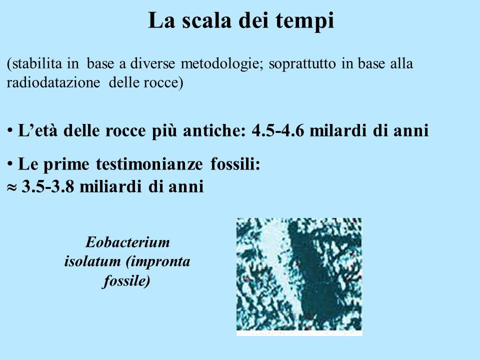 La scala dei tempi (stabilita in base a diverse metodologie; soprattutto in base alla radiodatazione delle rocce) Eobacterium isolatum (impronta fossi