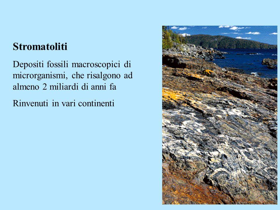 Stromatoliti Depositi fossili macroscopici di microrganismi, che risalgono ad almeno 2 miliardi di anni fa Rinvenuti in vari continenti
