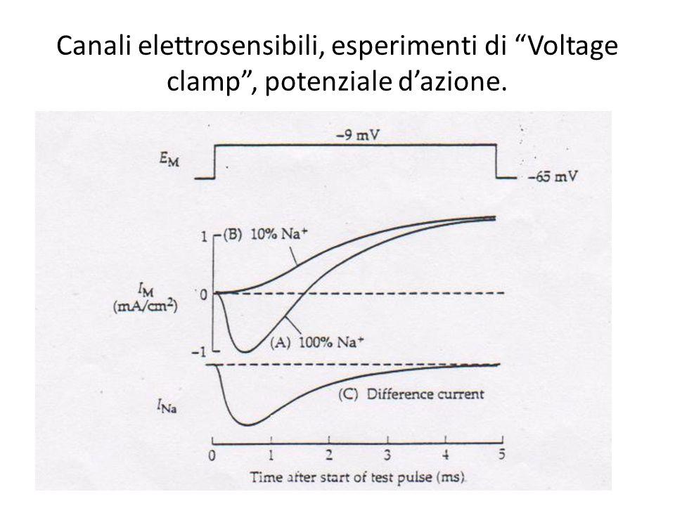 Canali elettrosensibili, esperimenti di Voltage clamp, potenziale dazione.