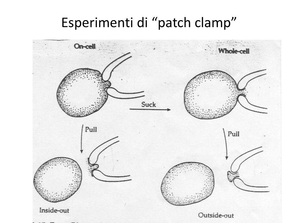 Esperimenti di patch clamp