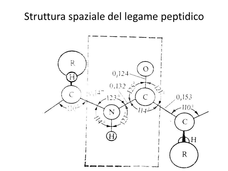 Struttura spaziale del legame peptidico
