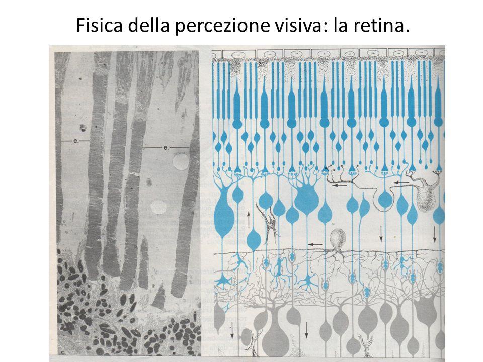 Fisica della percezione visiva: la retina.