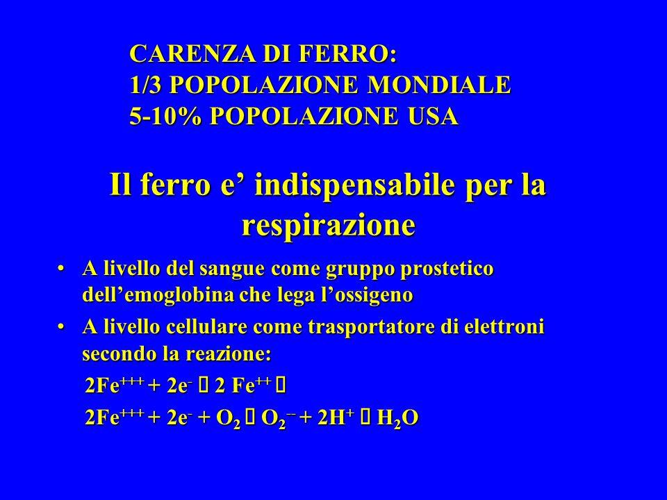 Il ferro e indispensabile per la respirazione A livello del sangue come gruppo prostetico dellemoglobina che lega lossigenoA livello del sangue come gruppo prostetico dellemoglobina che lega lossigeno A livello cellulare come trasportatore di elettroni secondo la reazione:A livello cellulare come trasportatore di elettroni secondo la reazione: 2Fe +++ + 2e - 2 Fe ++ 2Fe +++ + 2e - 2 Fe ++ 2Fe +++ + 2e - + O 2 O 2 -- + 2H + H 2 O 2Fe +++ + 2e - + O 2 O 2 -- + 2H + H 2 O CARENZA DI FERRO: 1/3 POPOLAZIONE MONDIALE 5-10% POPOLAZIONE USA