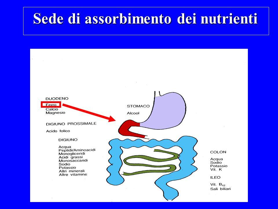 APOFERRITINA (guscio proteico di 24 subunità) FERRITINA (Fe-APOFERRITINA) Ogni molecola di Ferritina ingloba al suo interno circa 4500 atomi di Fe +++ (in forma cristallina SIDERITE)