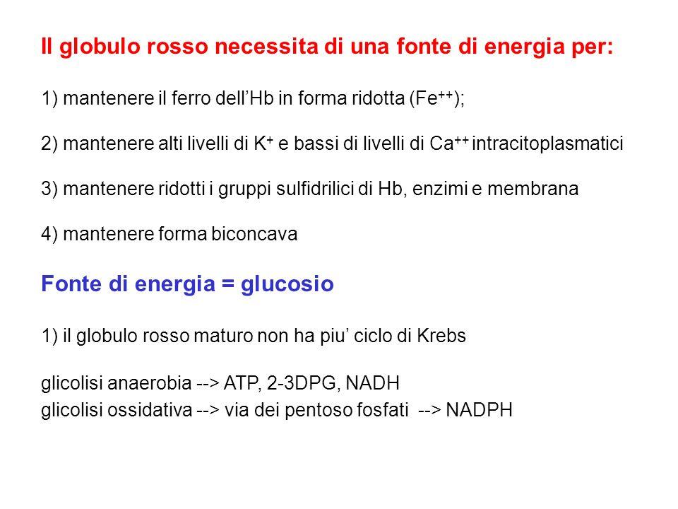 Il globulo rosso necessita di una fonte di energia per: 1) mantenere il ferro dellHb in forma ridotta (Fe ++ ); 2) mantenere alti livelli di K + e bas