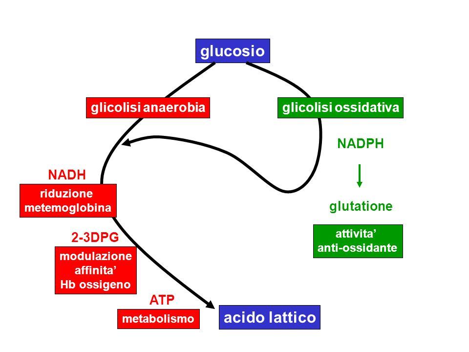 glucosio glicolisi anaerobiaglicolisi ossidativa NADPH attivita anti-ossidante glutatione NADH ATP 2-3DPG riduzione metemoglobina modulazione affinita
