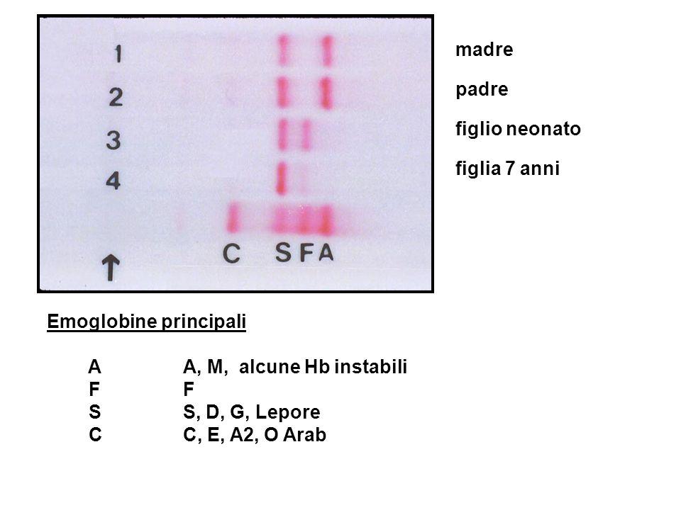 Emoglobine principali A A, M, alcune Hb instabili F F SS, D, G, Lepore CC, E, A2, O Arab madre padre figlio neonato figlia 7 anni