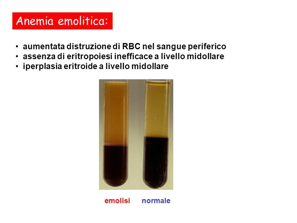 aumentata distruzione di RBC nel sangue periferico assenza di eritropoiesi inefficace a livello midollare iperplasia eritroide a livello midollare Ane