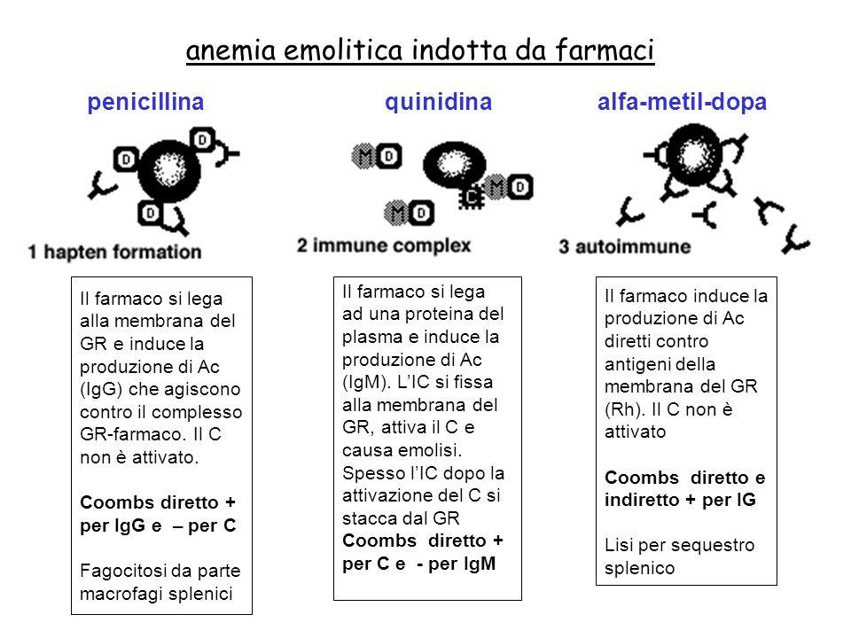 anemia emolitica indotta da farmaci penicillinaquinidinaalfa-metil-dopa Il farmaco si lega alla membrana del GR e induce la produzione di Ac (IgG) che