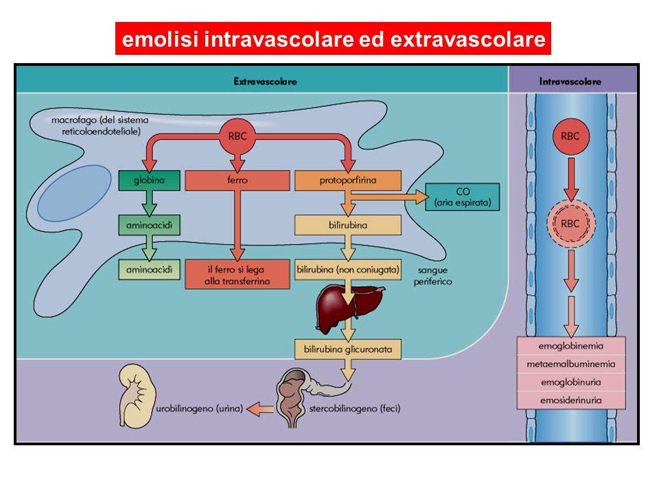 emolisi intravascolare ed extravascolare