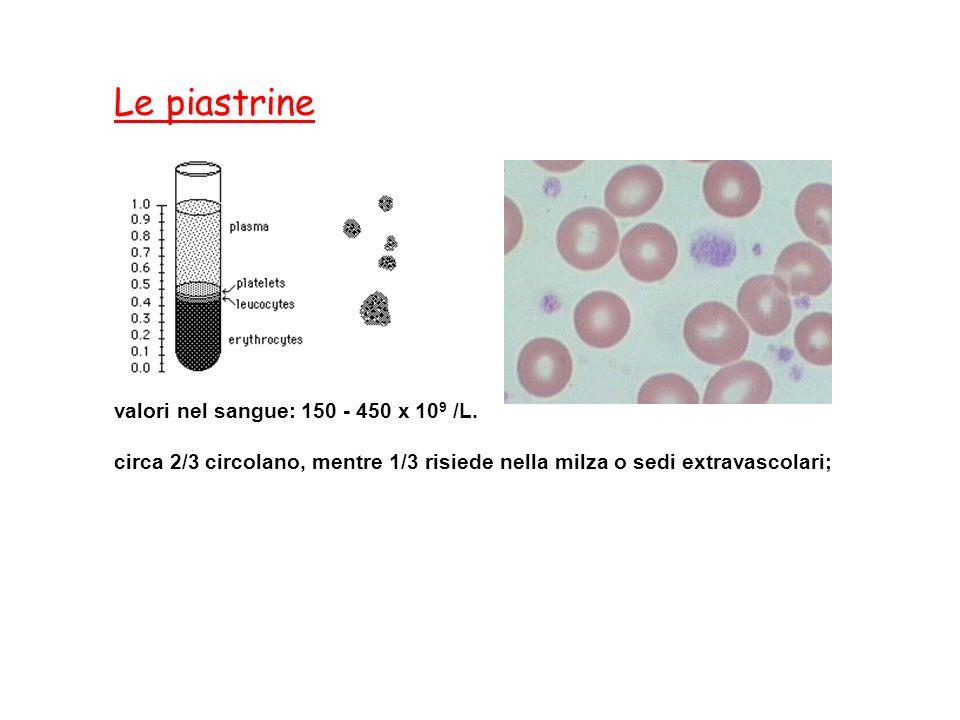 valori nel sangue: 150 - 450 x 10 9 /L. circa 2/3 circolano, mentre 1/3 risiede nella milza o sedi extravascolari; Le piastrine