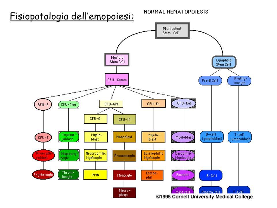 Fisiopatologia dellemopoiesi: