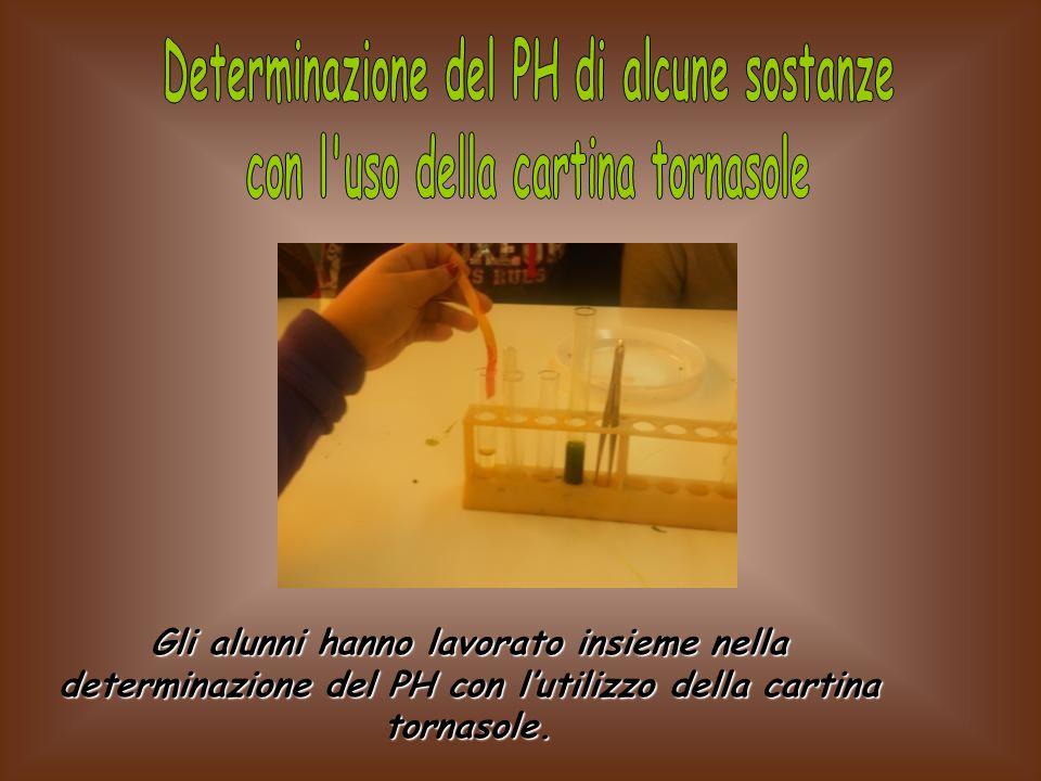 Gli alunni hanno lavorato insieme nella determinazione del PH con lutilizzo della cartina tornasole.