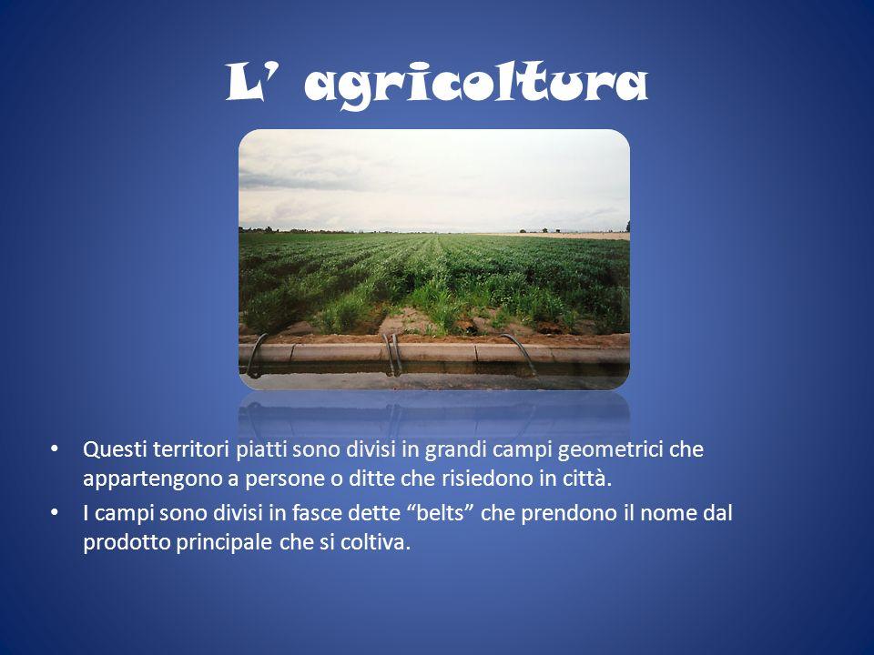 L agricoltura Questi territori piatti sono divisi in grandi campi geometrici che appartengono a persone o ditte che risiedono in città. I campi sono d