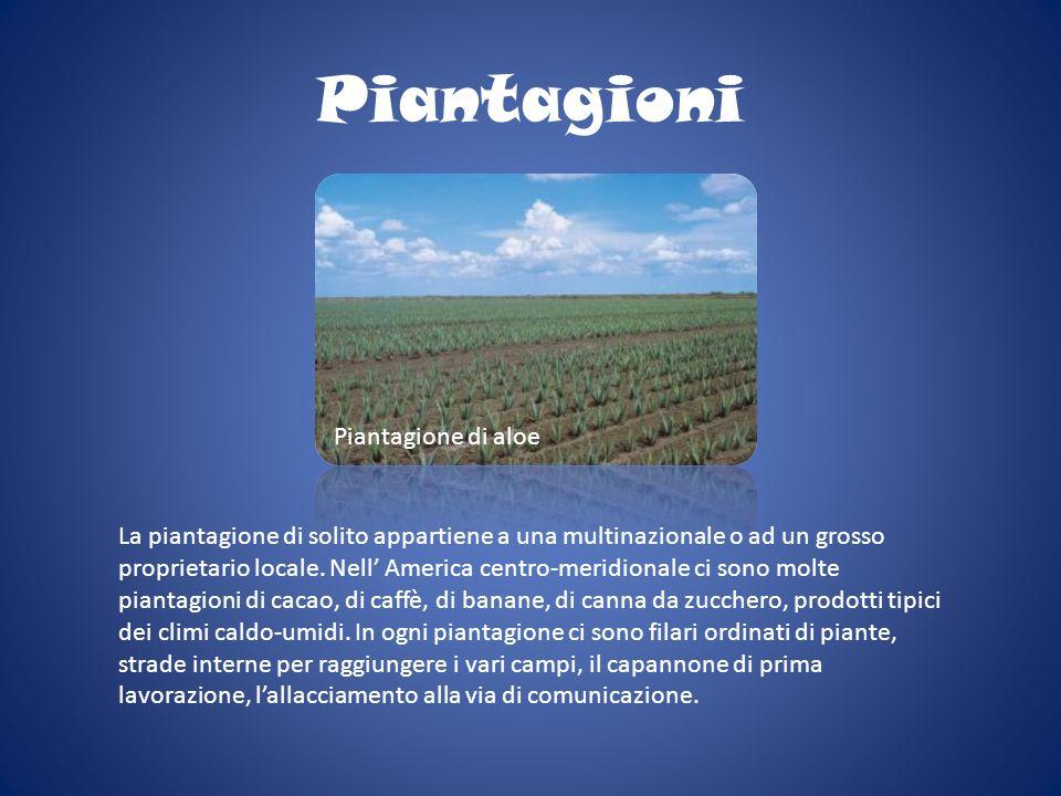 Piantagioni La piantagione di solito appartiene a una multinazionale o ad un grosso proprietario locale. Nell America centro-meridionale ci sono molte