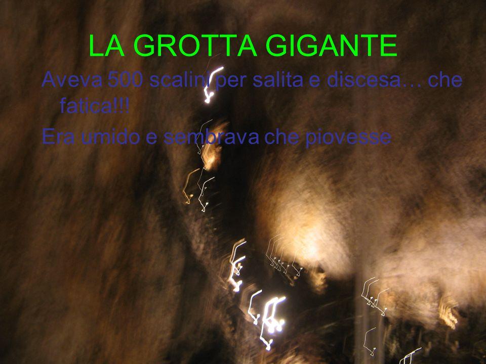 LA GROTTA GIGANTE Aveva 500 scalini per salita e discesa… che fatica!!! Era umido e sembrava che piovesse