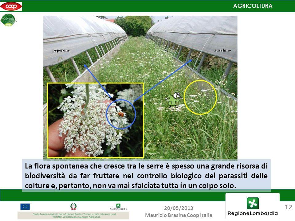 La flora spontanea che cresce tra le serre è spesso una grande risorsa di biodiversità da far fruttare nel controllo biologico dei parassiti delle col