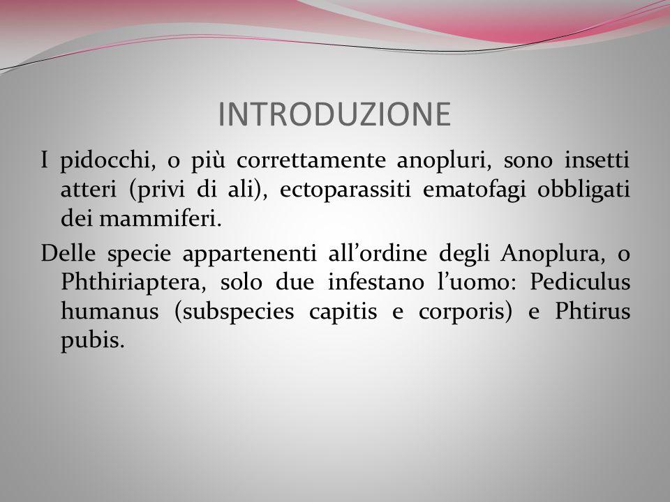 INTRODUZIONE I pidocchi, o più correttamente anopluri, sono insetti atteri (privi di ali), ectoparassiti ematofagi obbligati dei mammiferi. Delle spec