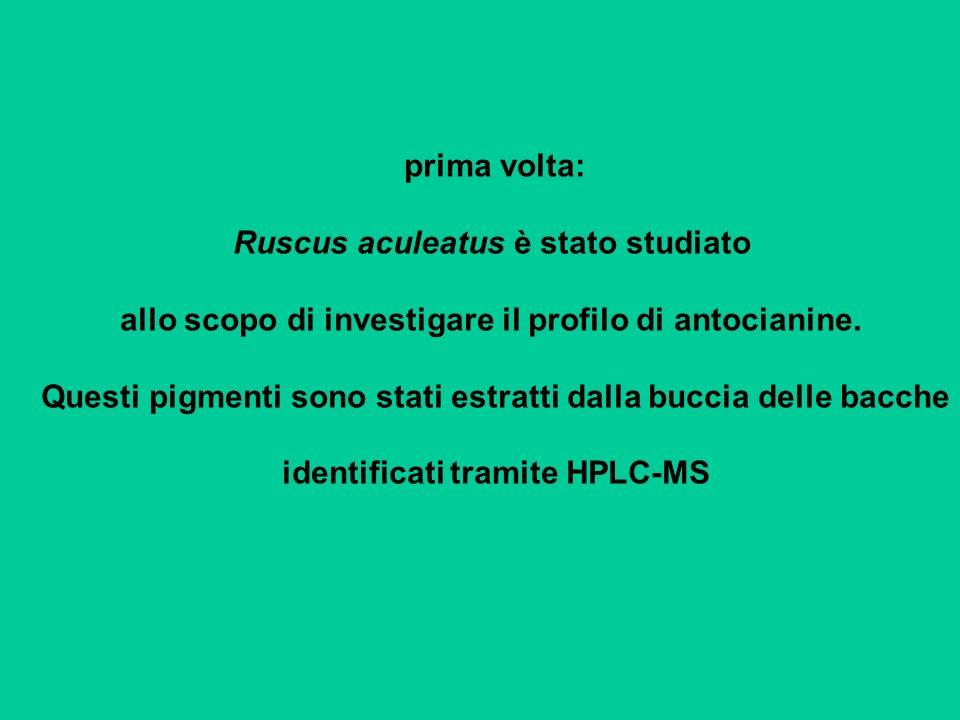 prima volta: Ruscus aculeatus è stato studiato allo scopo di investigare il profilo di antocianine. Questi pigmenti sono stati estratti dalla buccia d
