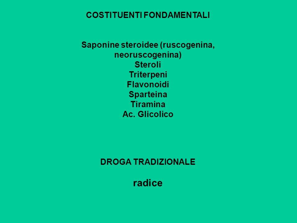 COSTITUENTI FONDAMENTALI Saponine steroidee (ruscogenina, neoruscogenina) Steroli Triterpeni Flavonoidi Sparteina Tiramina Ac. Glicolico DROGA TRADIZI