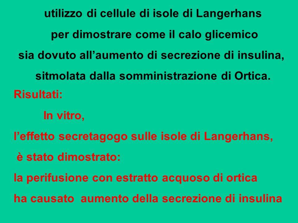 utilizzo di cellule di isole di Langerhans per dimostrare come il calo glicemico sia dovuto allaumento di secrezione di insulina, sitmolata dalla somm