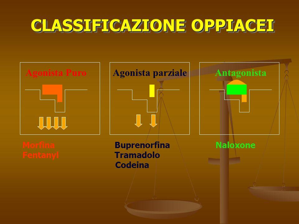 Morfina Buprenorfina Naloxone Fentanyl Tramadolo Codeina Agonista PuroAgonista parzialeAntagonista CLASSIFICAZIONE OPPIACEI