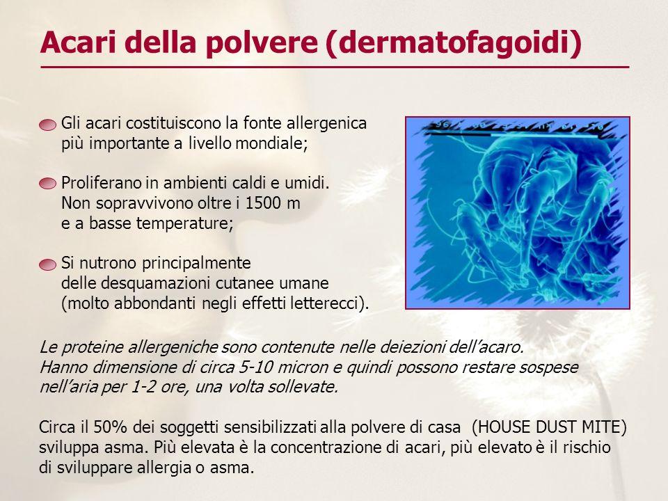 Acari della polvere (dermatofagoidi) Gli acari costituiscono la fonte allergenica più importante a livello mondiale; Proliferano in ambienti caldi e u