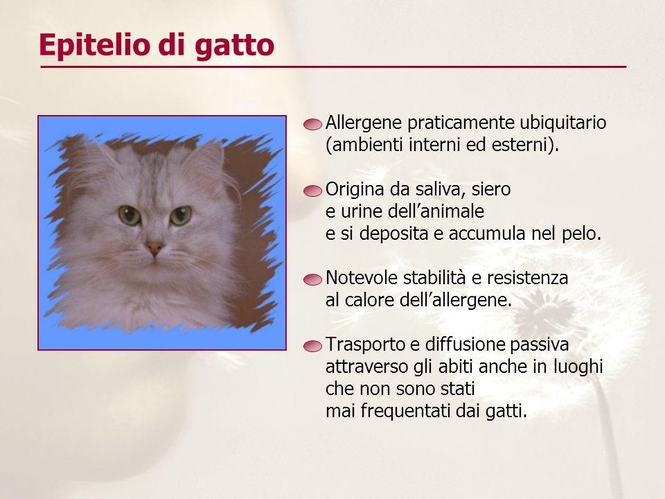 Epitelio di gatto Allergene praticamente ubiquitario (ambienti interni ed esterni). Origina da saliva, siero e urine dellanimale e si deposita e accum