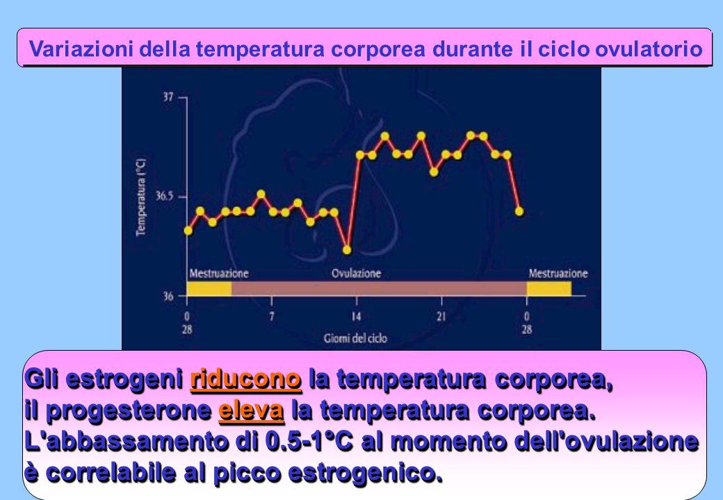 Gli estrogeni riducono la temperatura corporea, il progesterone eleva la temperatura corporea. L'abbassamento di 0.5-1°C al momento dell'ovulazione è
