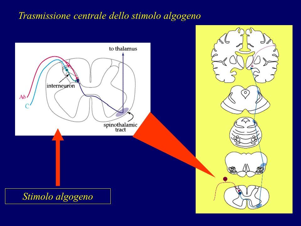 Stimolo algogeno Trasmissione centrale dello stimolo algogeno