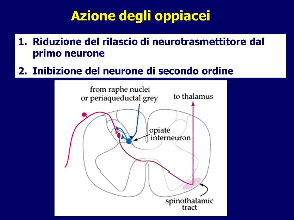 Azione degli oppiacei 1.Riduzione del rilascio di neurotrasmettitore dal primo neurone 2.Inibizione del neurone di secondo ordine