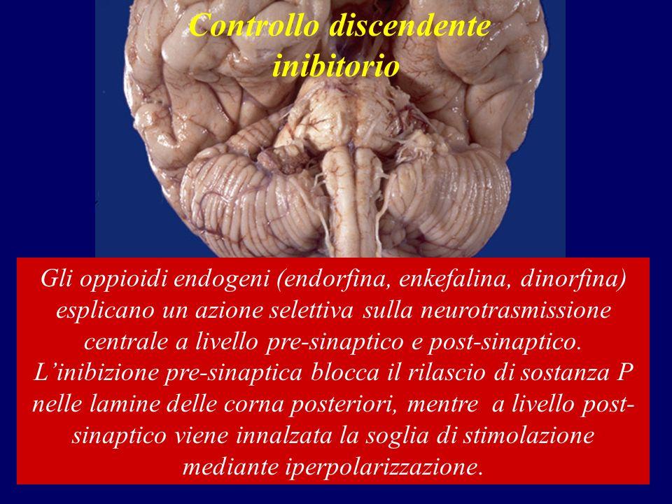 Controllo discendente inibitorio Gli oppioidi endogeni (endorfina, enkefalina, dinorfina) esplicano un azione selettiva sulla neurotrasmissione centrale a livello pre-sinaptico e post-sinaptico.