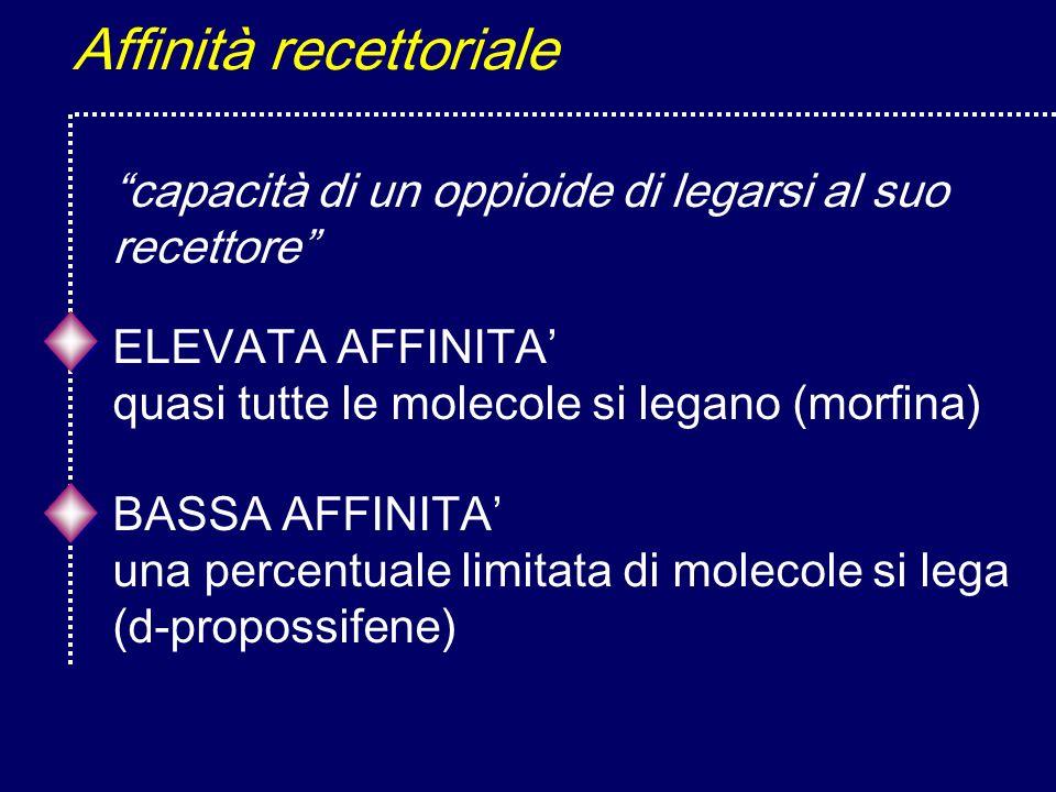 Affinità recettoriale ELEVATA AFFINITA quasi tutte le molecole si legano (morfina) capacità di un oppioide di legarsi al suo recettore BASSA AFFINITA una percentuale limitata di molecole si lega (d-propossifene)